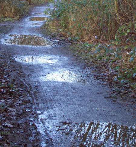More puddles, Transpennine Trail, Heaton Mersey